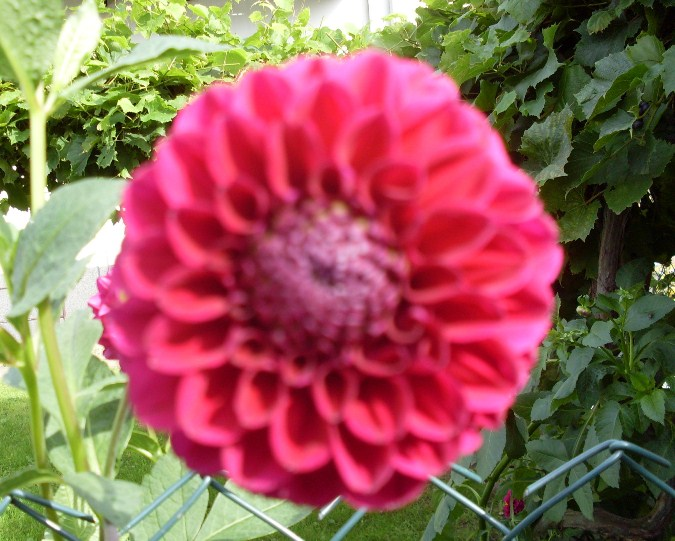 Przeglądasz zdjęcia z artykułu: Pracowite lato - Wrzesień 2012